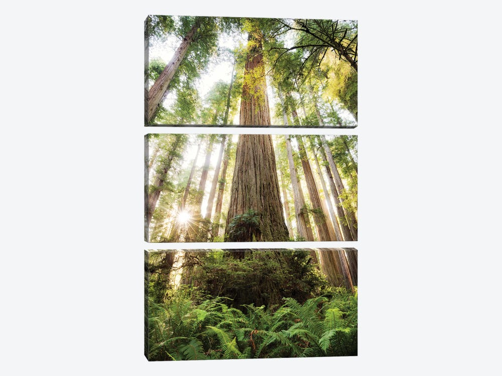 Redwood Forest by Stefan Hefele 3-piece Canvas Artwork