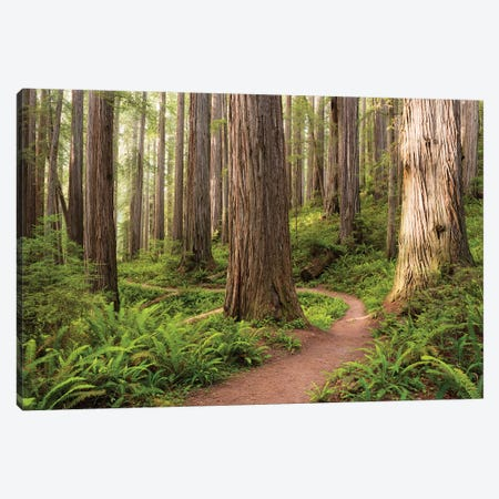 Redwood Trail Canvas Print #STF138} by Stefan Hefele Canvas Art
