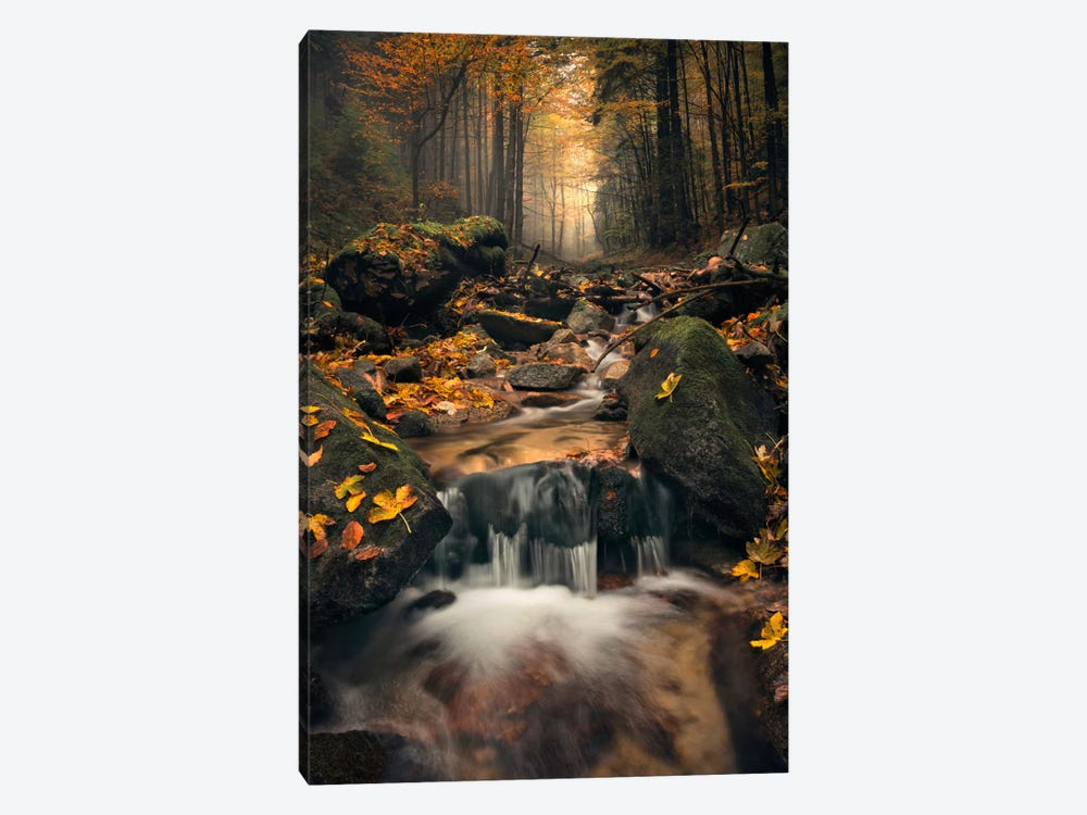 Autumn Jungle by Stefan Hefele 1-piece Canvas Art