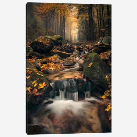 Autumn Jungle Canvas Print #STF13} by Stefan Hefele Canvas Artwork