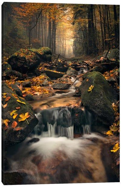 Autumn Jungle Canvas Art Print