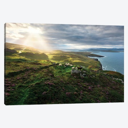 Sheep's Paradise Canvas Print #STF146} by Stefan Hefele Canvas Art