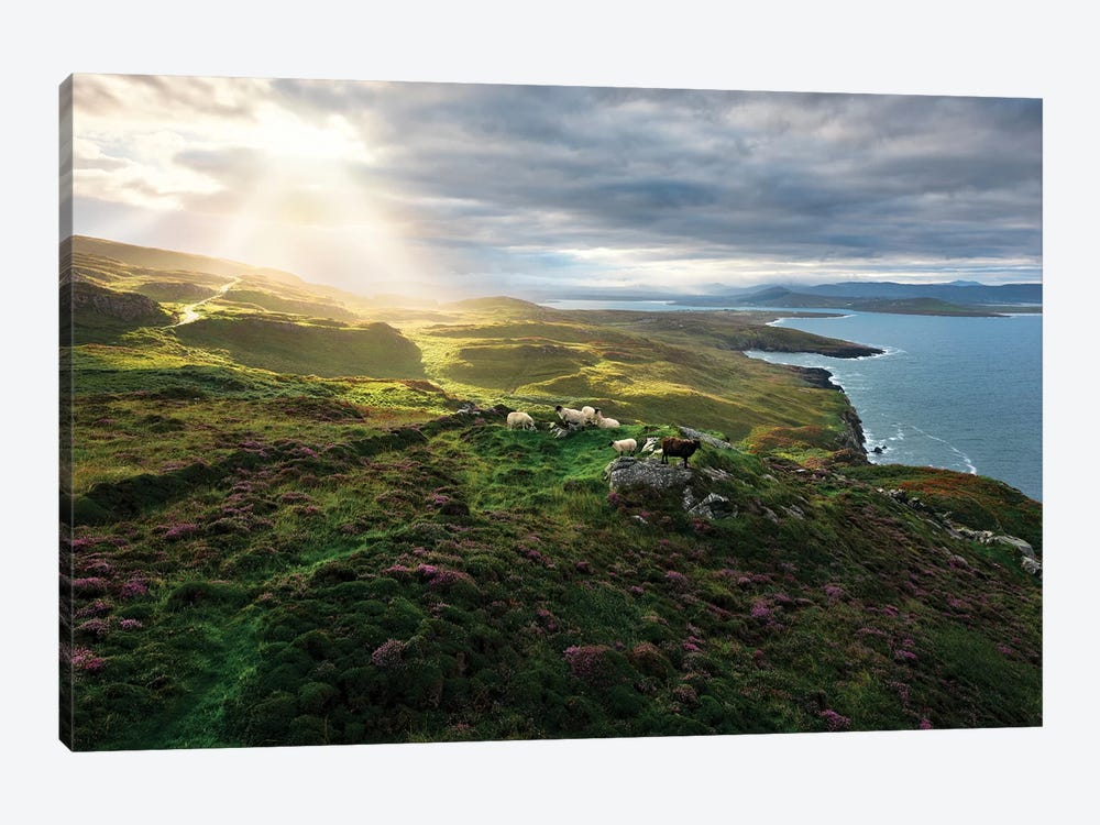 Sheep's Paradise by Stefan Hefele 1-piece Canvas Art