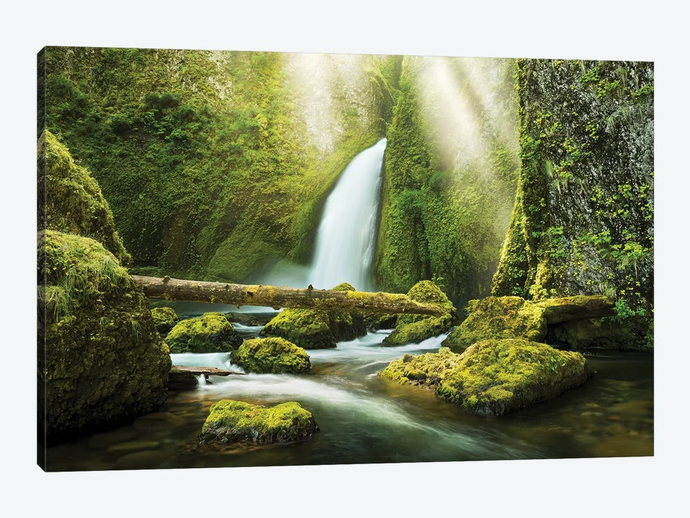 The Creation by Stefan Hefele 1-piece Canvas Wall Art
