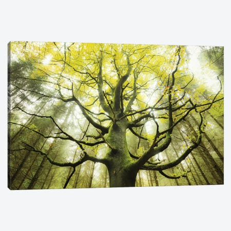 The Dreamtree Canvas Print #STF156} by Stefan Hefele Art Print