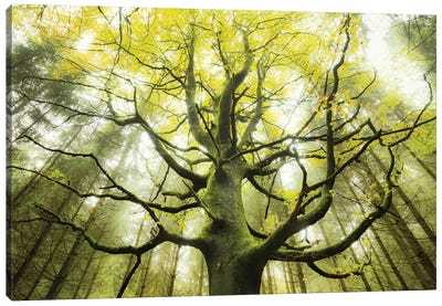 The Dreamtree Canvas Art Print
