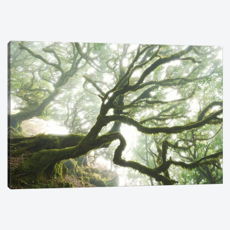 The Forgotten Forest Canvas Print #STF159} by Stefan Hefele Canvas Art
