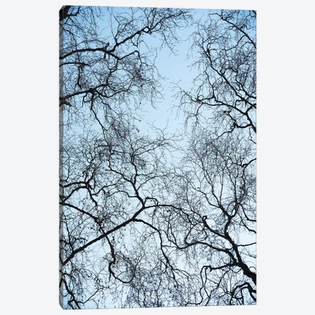 Tree Art Canvas Print #STF171} by Stefan Hefele Canvas Wall Art