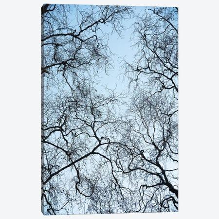 Tree Art Canvas Print #STF171} by Stefan Hefele Canvas Wall Art