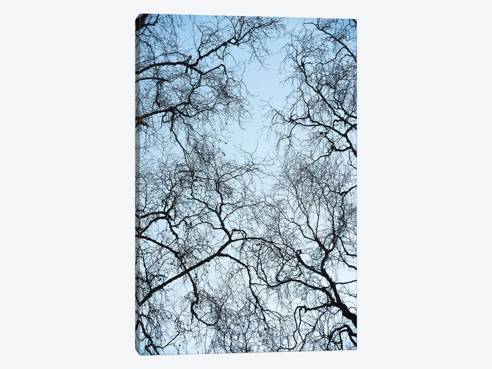 Tree Art by Stefan Hefele 1-piece Canvas Art