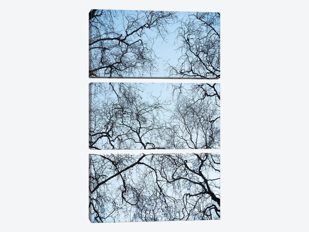 Tree Art by Stefan Hefele 3-piece Canvas Artwork