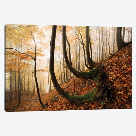 Trollshaws Canvas Print #STF172} by Stefan Hefele Canvas Wall Art