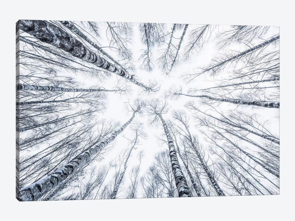 Upside Down by Stefan Hefele 1-piece Canvas Art