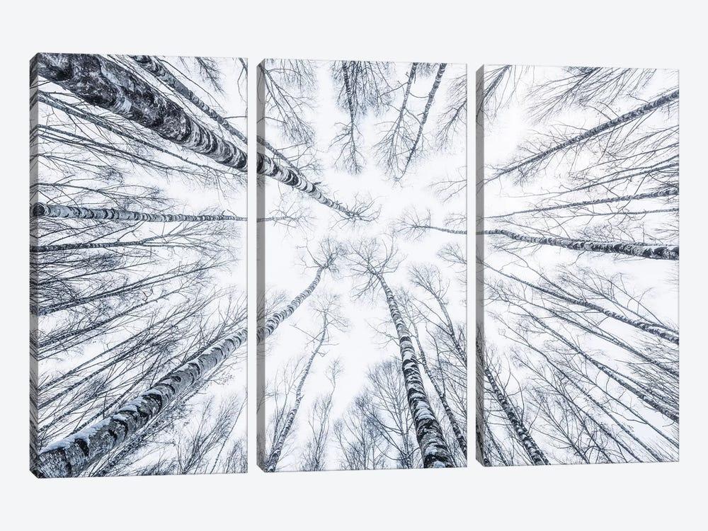 Upside Down by Stefan Hefele 3-piece Canvas Wall Art