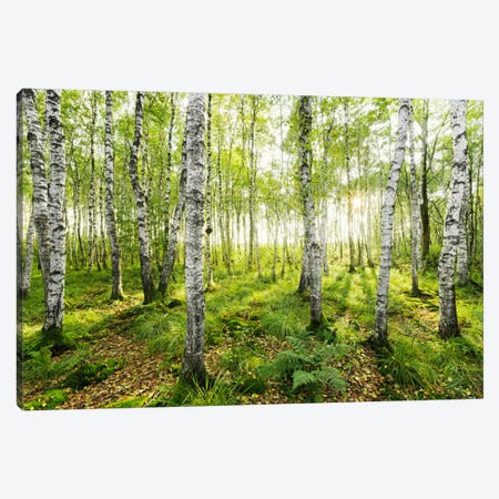 Birch Forest I Canvas Print #STF17} by Stefan Hefele Canvas Print