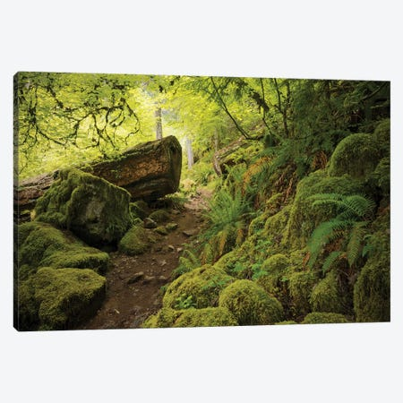 Watterfall Path Canvas Print #STF182} by Stefan Hefele Canvas Print