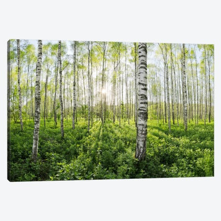 Birch Forest II Canvas Print #STF18} by Stefan Hefele Canvas Wall Art
