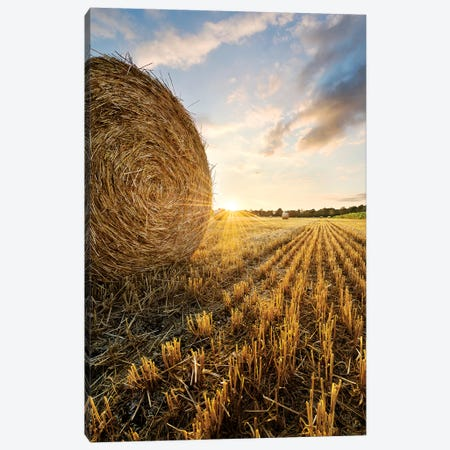 Country Gold Canvas Print #STF197} by Stefan Hefele Art Print