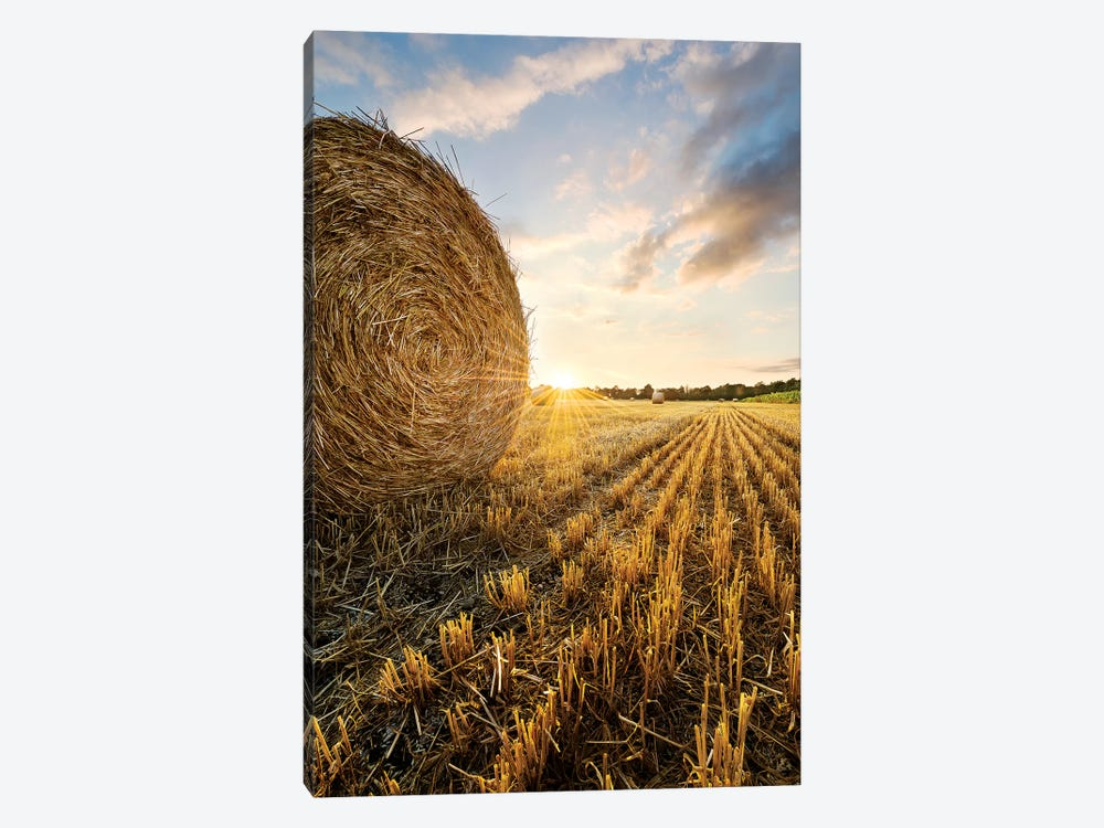 Country Gold by Stefan Hefele 1-piece Canvas Wall Art