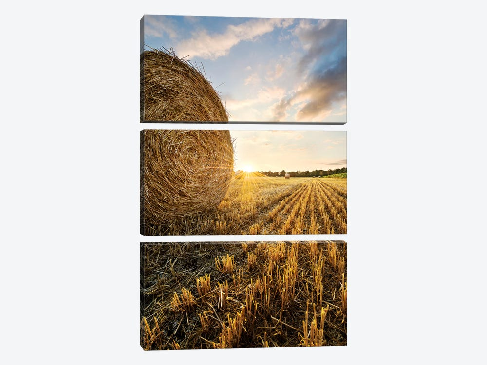 Country Gold by Stefan Hefele 3-piece Canvas Wall Art
