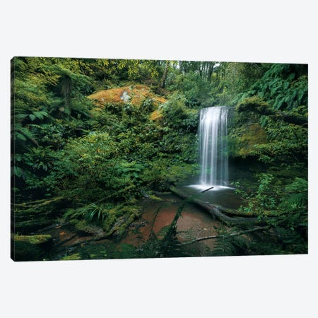 Fern Garden Canvas Print #STF209} by Stefan Hefele Canvas Art
