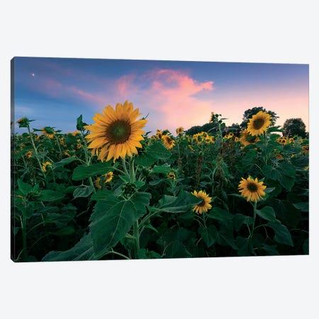 Sunflower Tale Canvas Print #STF245} by Stefan Hefele Art Print