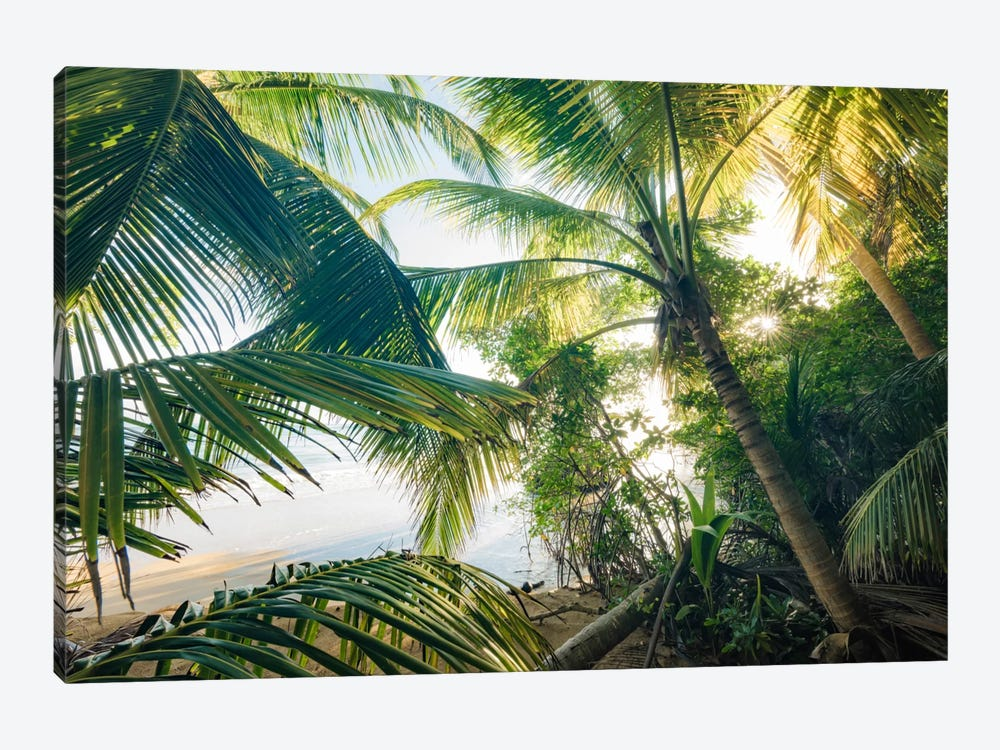 Coconut Jungle by Stefan Hefele 1-piece Canvas Wall Art
