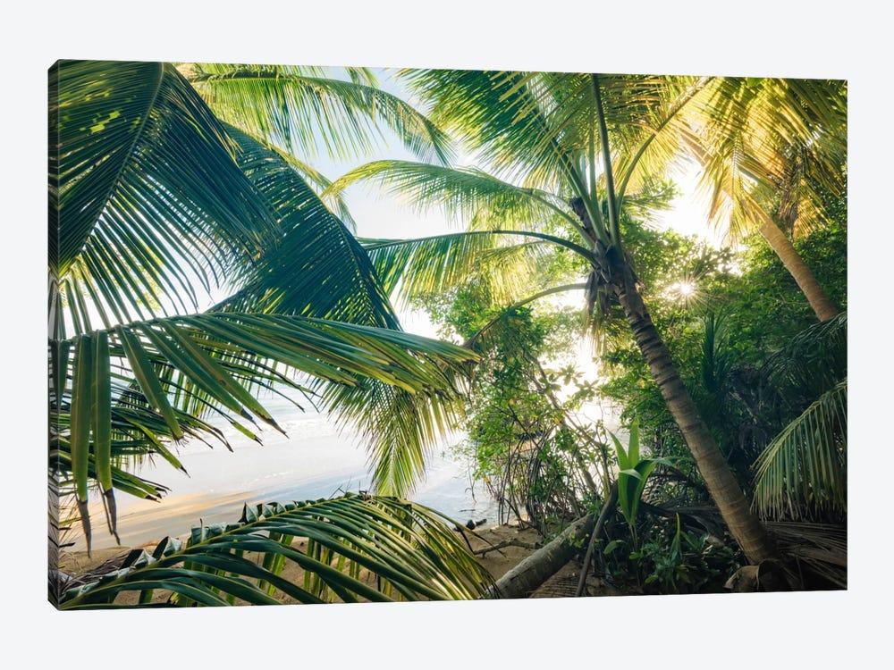 Coconut Jungle by Stefan Hefele 1-piece Canvas Wall Art