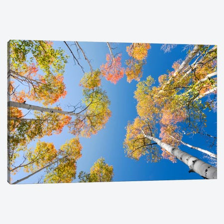 Colours Canvas Print #STF32} by Stefan Hefele Canvas Artwork