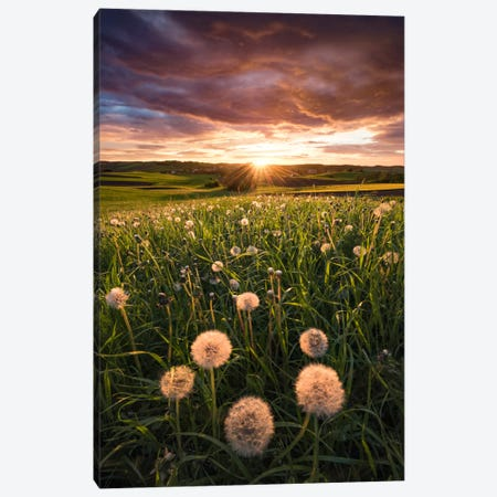 Dandelion Canvas Print #STF39} by Stefan Hefele Canvas Wall Art