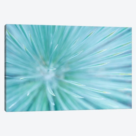 Abstract Canvas Print #STF3} by Stefan Hefele Canvas Art