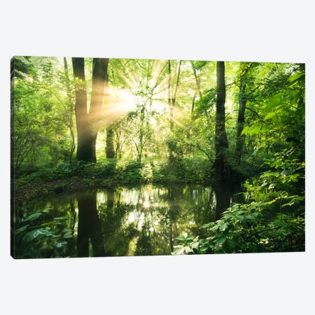 Eden Woods Canvas Print #STF48} by Stefan Hefele Art Print