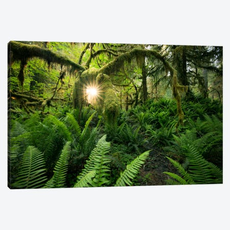 Elk's Gateway, Hoh Rainforest Canvas Print #STF49} by Stefan Hefele Canvas Print