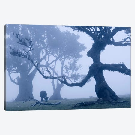 Ents I Canvas Print #STF50} by Stefan Hefele Canvas Art