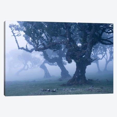 Ents II Canvas Print #STF51} by Stefan Hefele Canvas Art