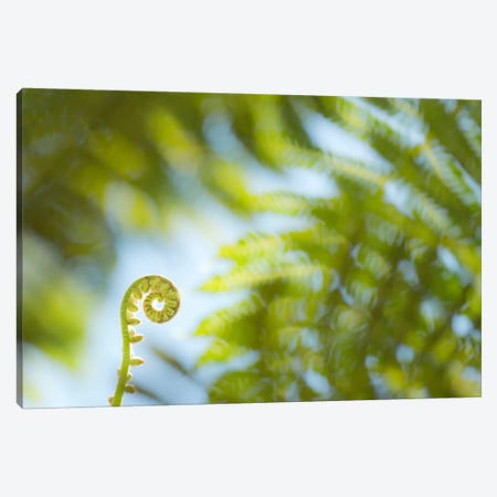 Fern Detail Canvas Print #STF55} by Stefan Hefele Canvas Print