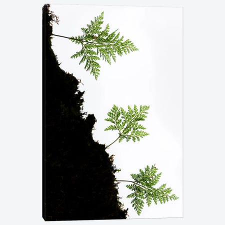Fern Trio II Canvas Print #STF57} by Stefan Hefele Canvas Art Print