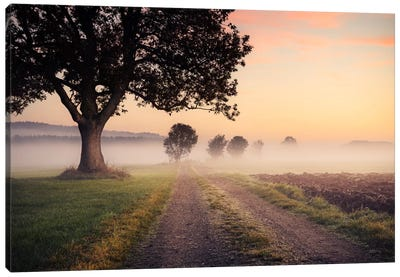 Fog Path Canvas Art Print