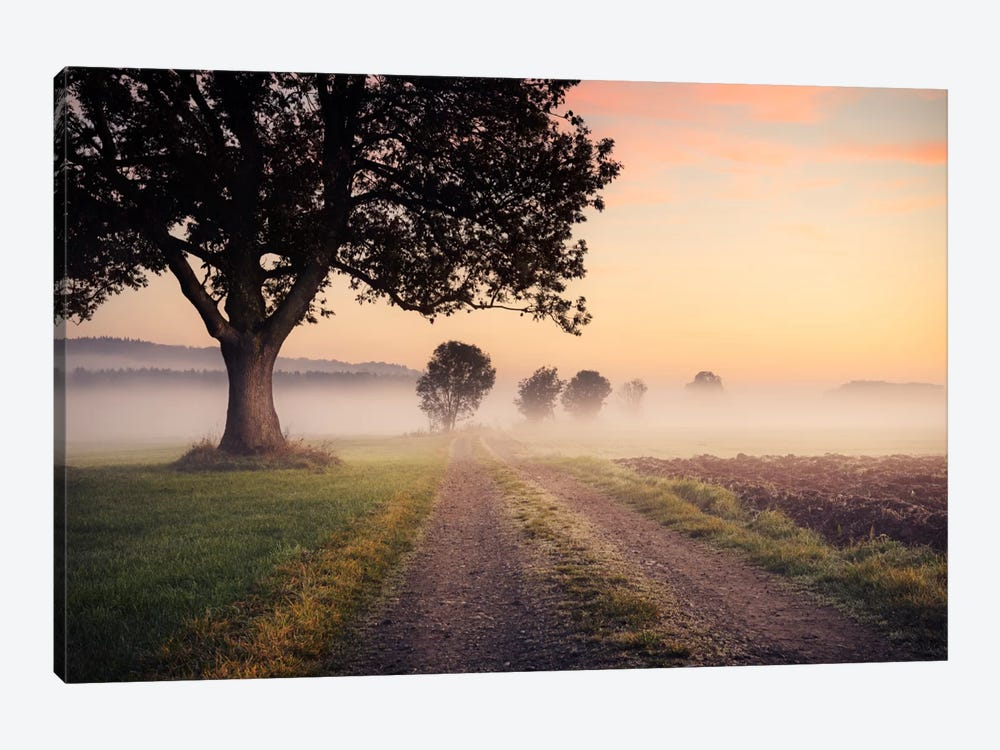 Fog Path by Stefan Hefele 1-piece Canvas Art