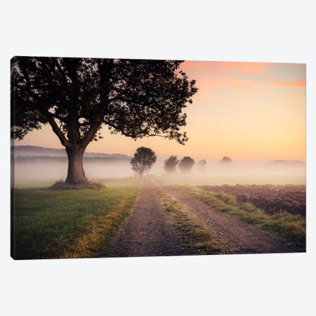 Fog Path Canvas Print #STF60} by Stefan Hefele Canvas Art Print