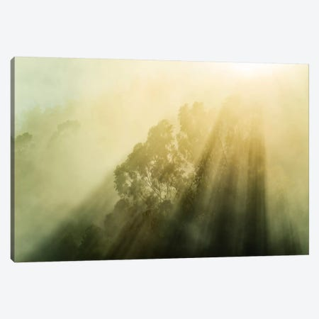 Fogalyptus Canvas Print #STF61} by Stefan Hefele Canvas Print