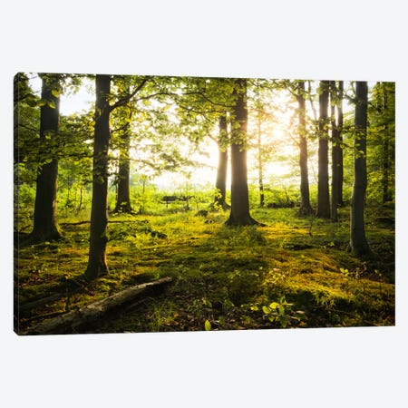 Forest Canvas Print #STF63} by Stefan Hefele Art Print