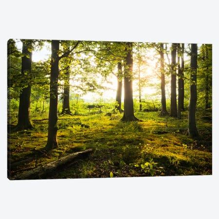 Forest Canvas Print #STF63} by Stefan Hefele Art Print