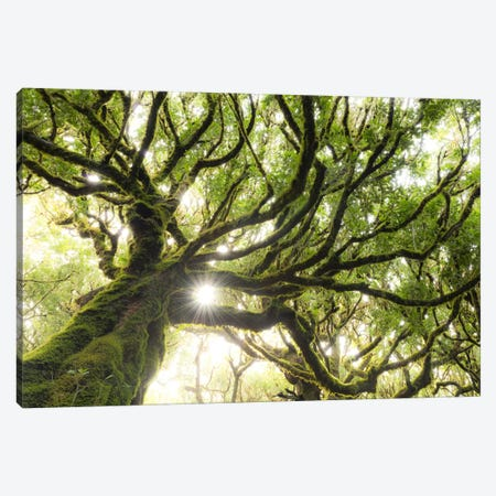 Forest Star Canvas Print #STF64} by Stefan Hefele Canvas Artwork