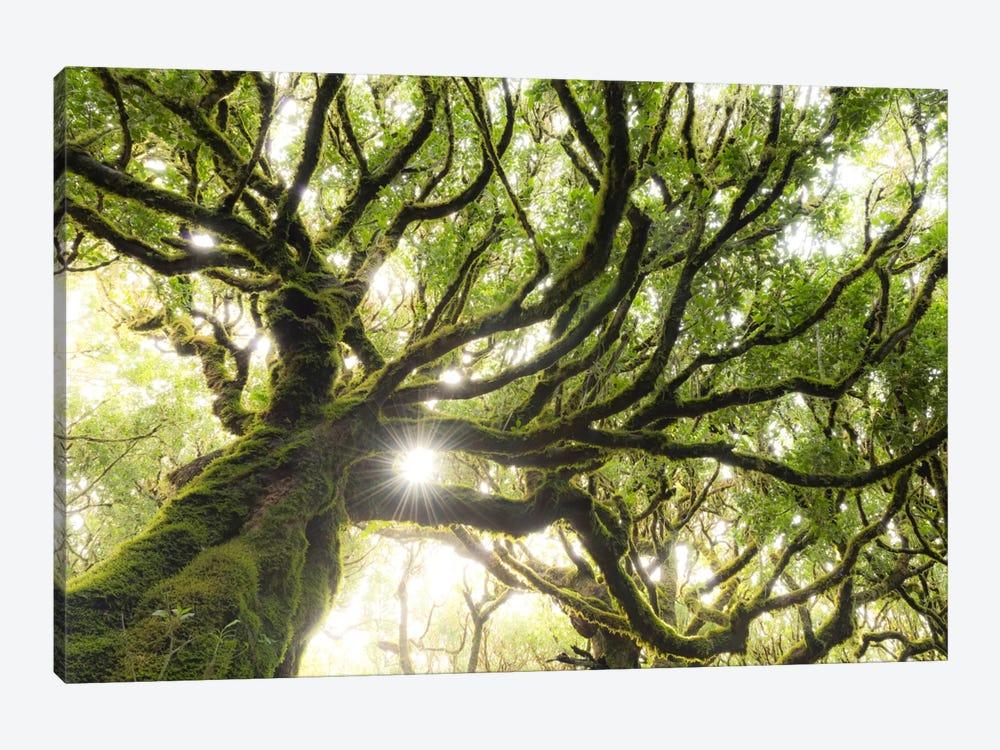 Forest Star by Stefan Hefele 1-piece Canvas Artwork