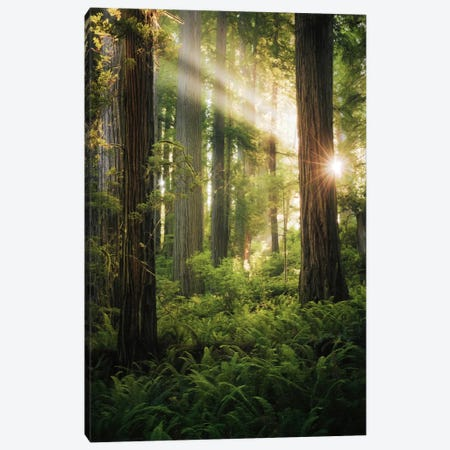 Goblin's Woods Canvas Print #STF71} by Stefan Hefele Canvas Wall Art
