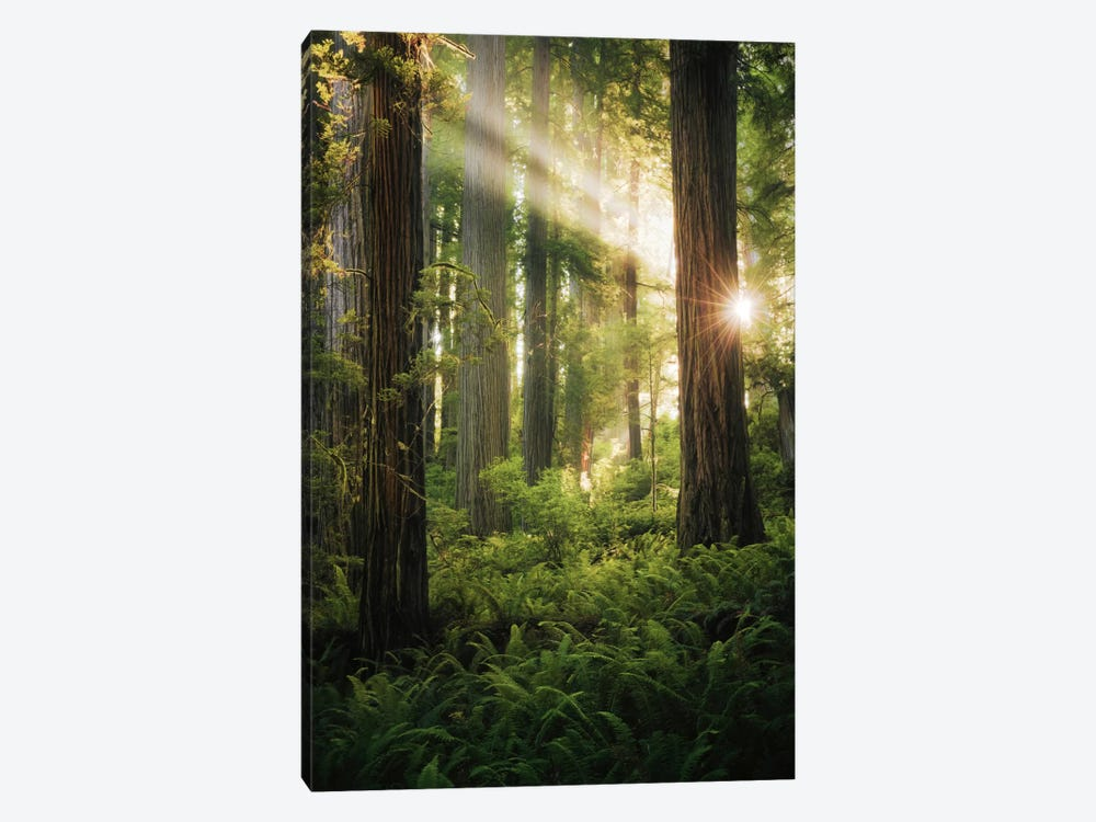 Goblin's Woods by Stefan Hefele 1-piece Canvas Artwork