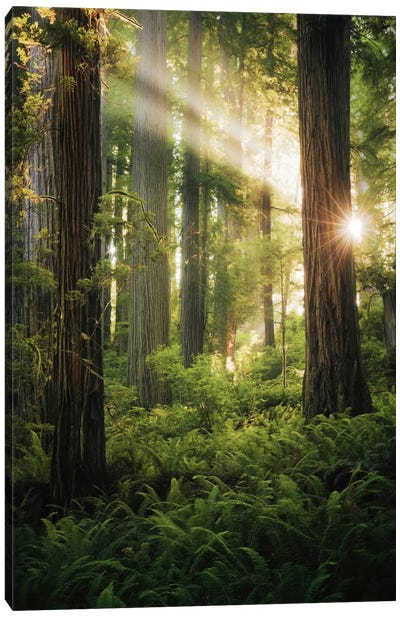 Goblin's Woods Canvas Art Print