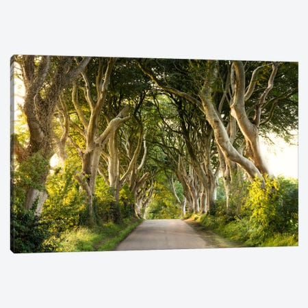 Golden Avenue, Dark Hedges Canvas Print #STF74} by Stefan Hefele Canvas Print