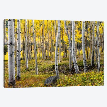 Golden Times - Rockies Canvas Print #STF78} by Stefan Hefele Canvas Artwork